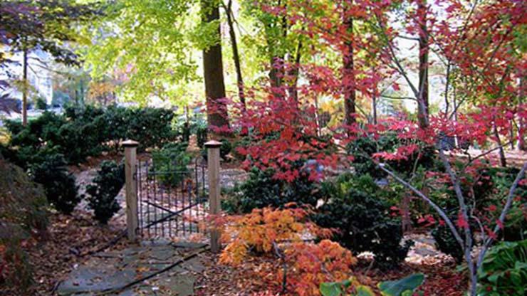 The Sorge Garden