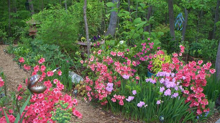 English Garden—Woodland Paradise
