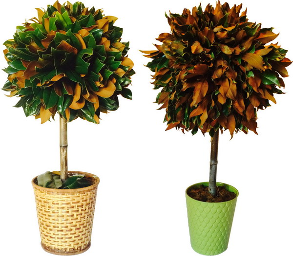 fresh and dried greenery topiaries