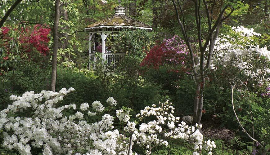 The Yoga Garden