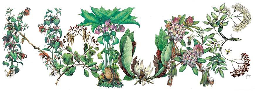 Botanical illustration spelling 'Nature'