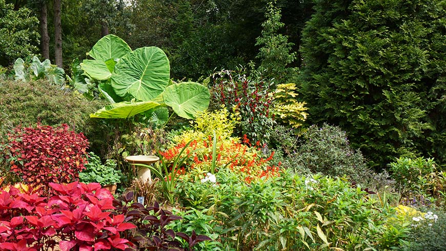 Bryce Lane's home garden