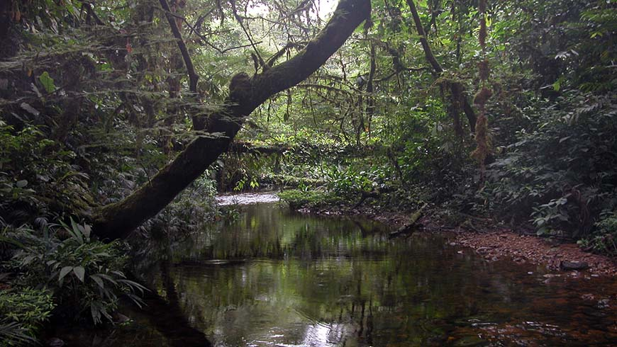 stream in Ecuador