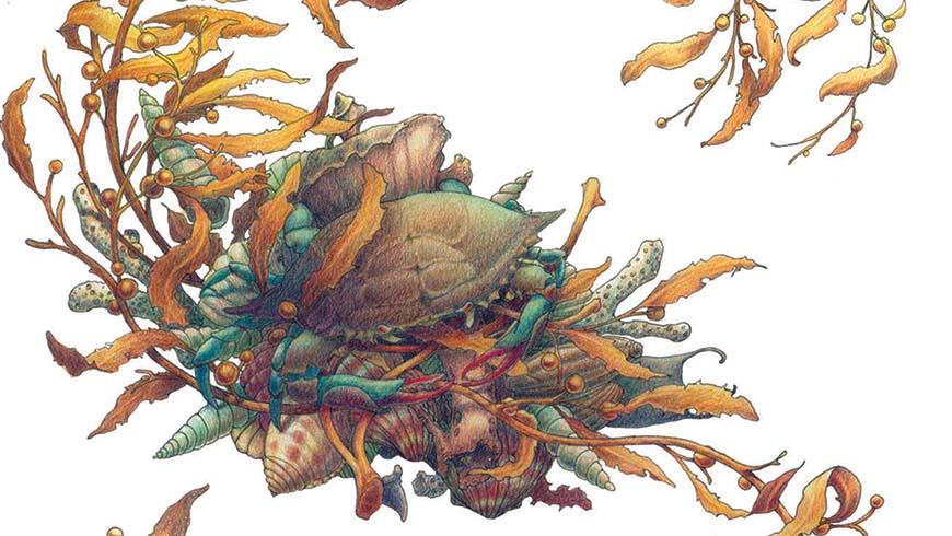 seaweed and crab watercolor