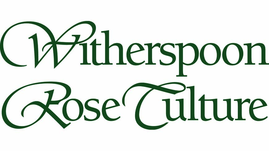 Withespoon Rose Culture
