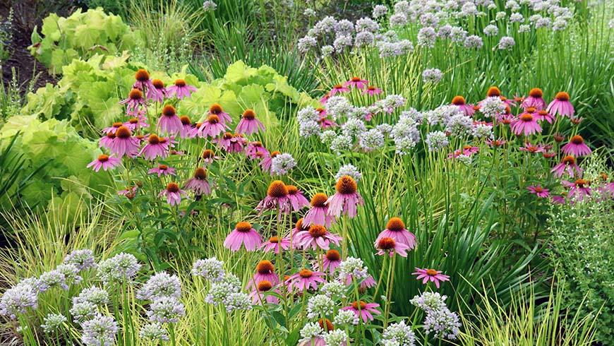 flowering plant community
