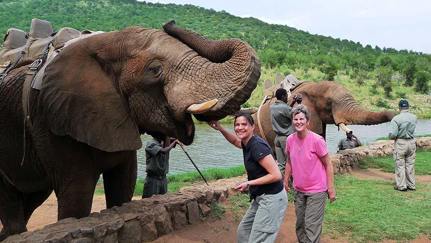 petting elephants