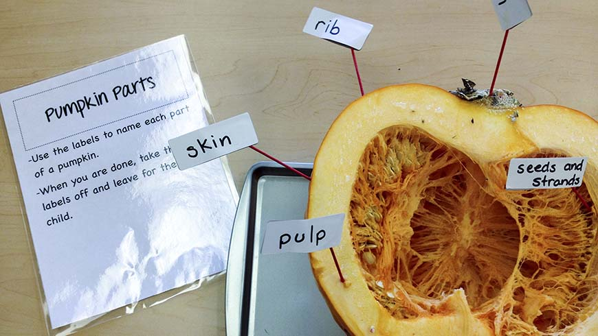 split pumpkin with parts labeled