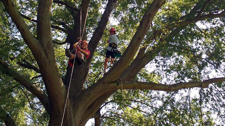 tree climbers at the JCRA