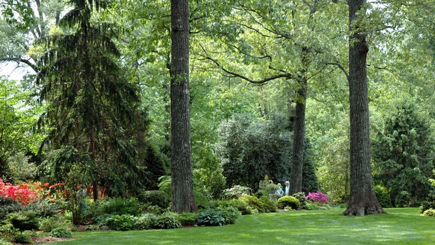 Graham Ray's garden