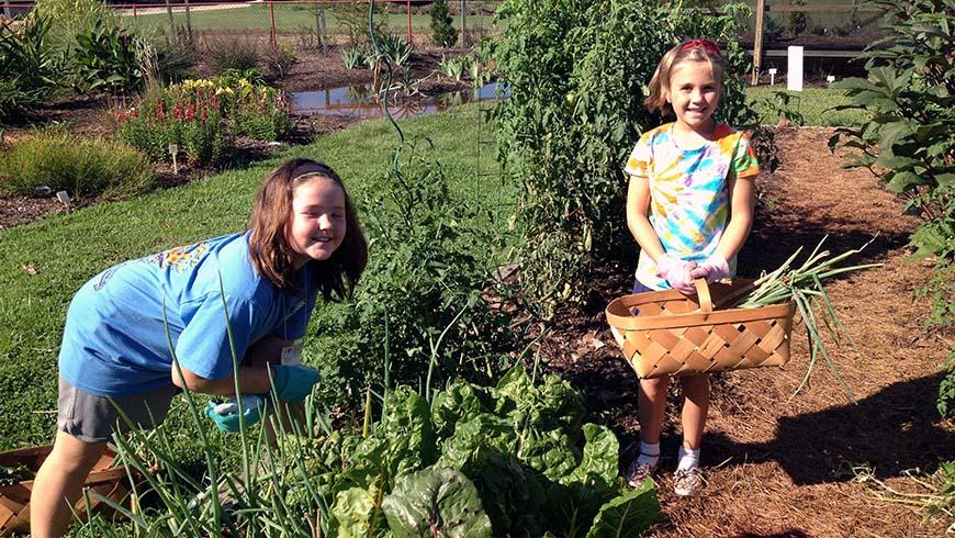 children harvesting in garden