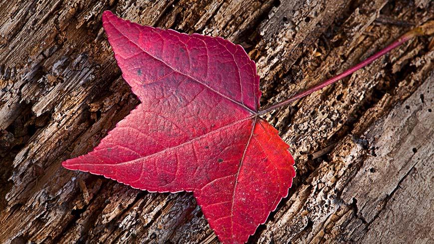 colorful leaf against bark