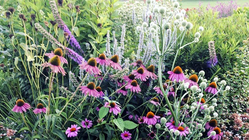 pollinator garden in flower