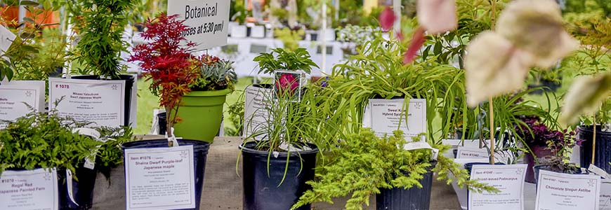 JC Raulston Arboretum - Gala in the Garden and Rare Plant Auction