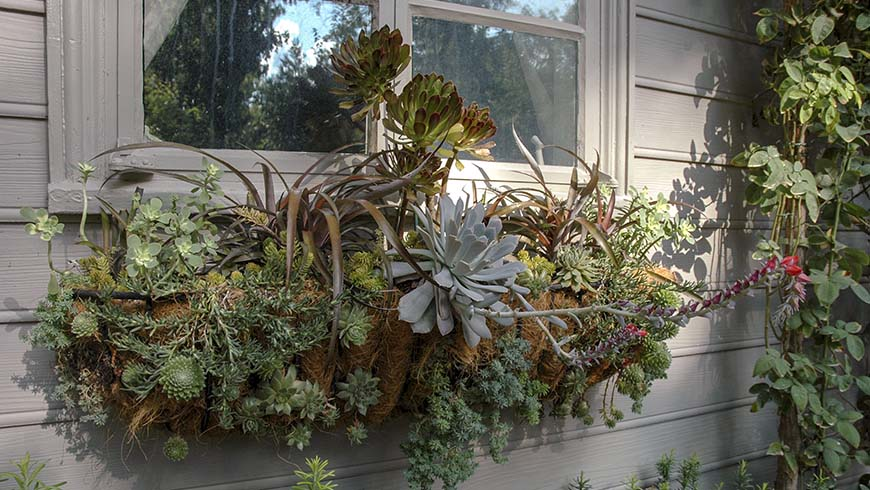 window box with succulents