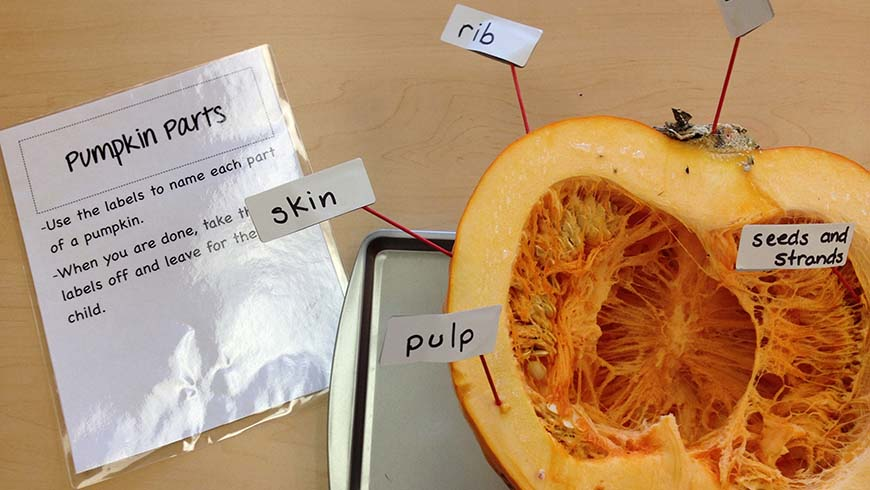 pumpkin with labeled parts