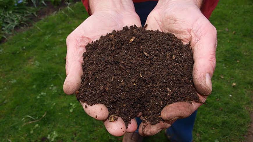 fresh compost held in hands