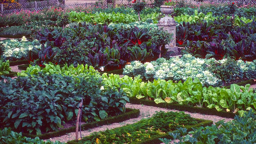 cool-season vegetable garden