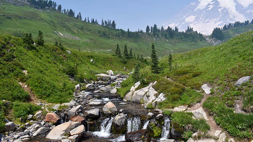 wildflowers along stream and waterfall near Mt. Rainier