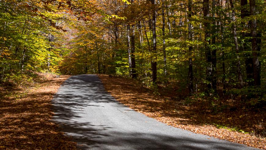 fall foliage along roadside
