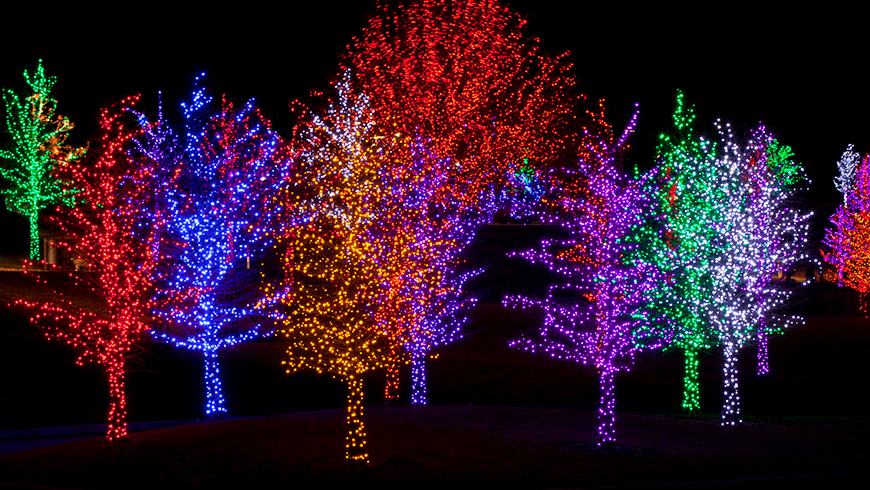 colorful holiday lights on deciduous trees