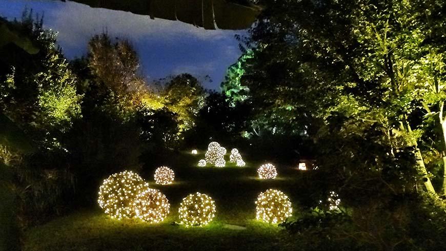 Jc Raulston Arboretum Moonlight In The Garden