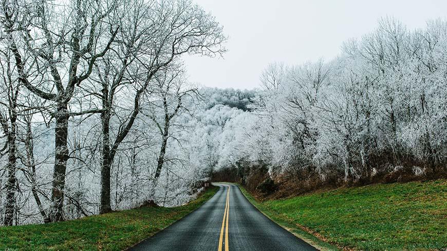 heavy frost on trees