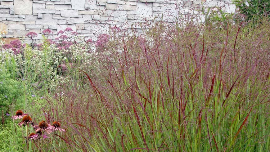 landscape vignette with grasses