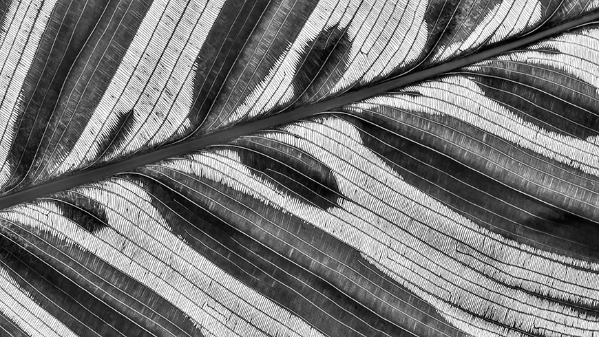 black and white photograph of a feather