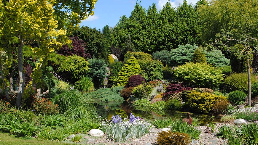 garden scene with many trees and shrubs