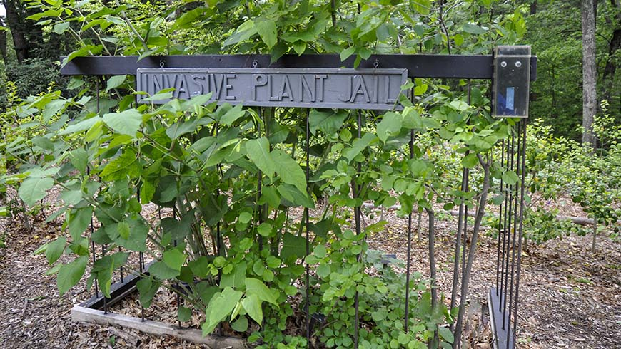 invasive plant jail, Garden in the Woods