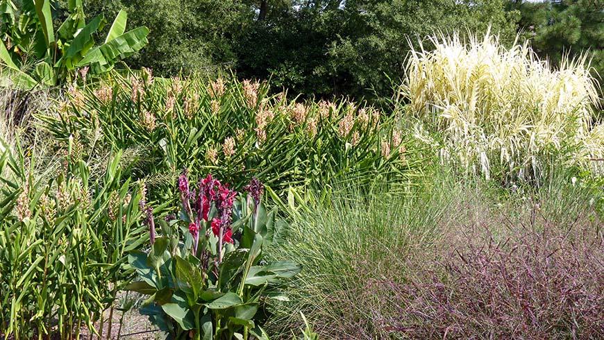 Monocot Garden