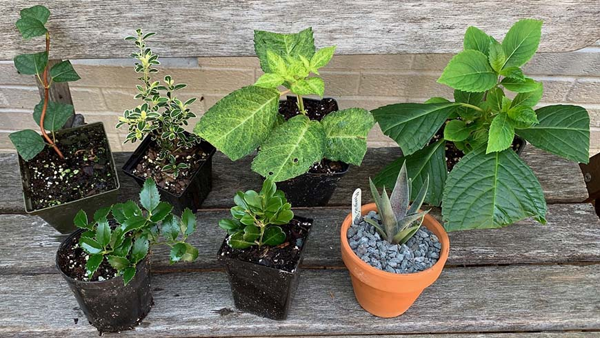 newly at-home propagated plants