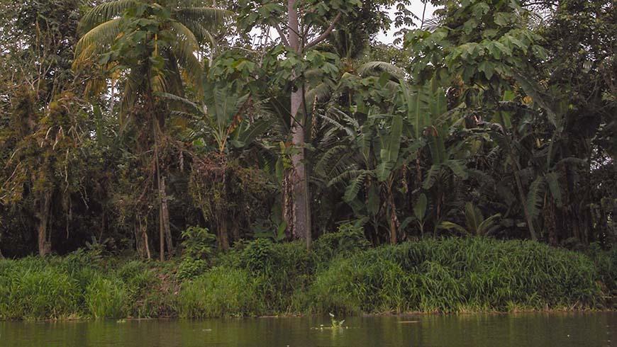 Rio Cayapas