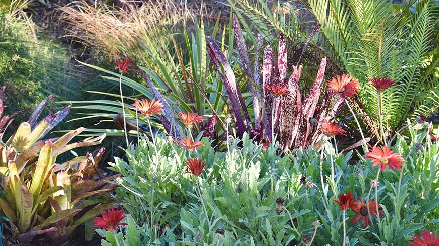 tropical plants in a garden scene