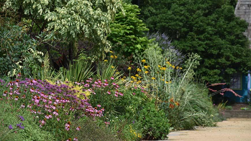 tall flowering perennials in the Perennial Border