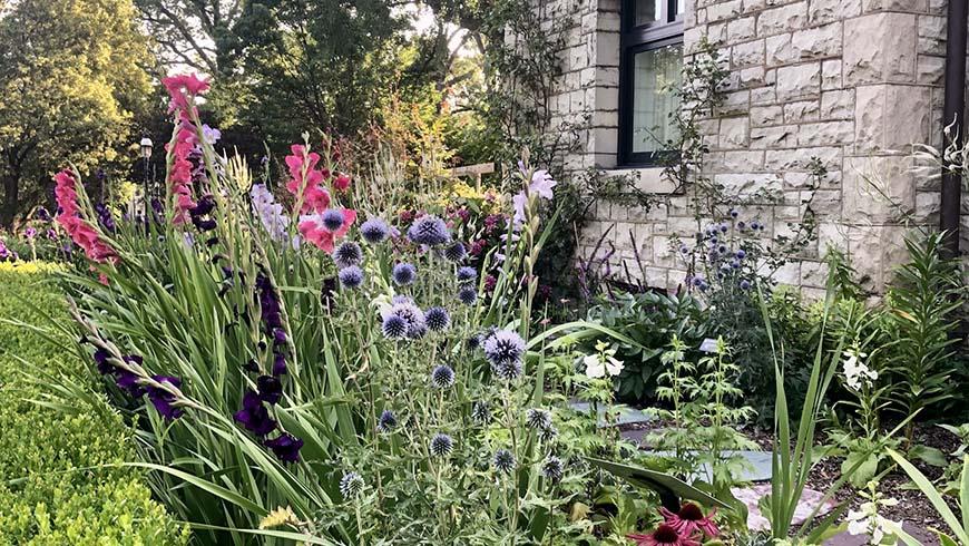 garden scene next to home
