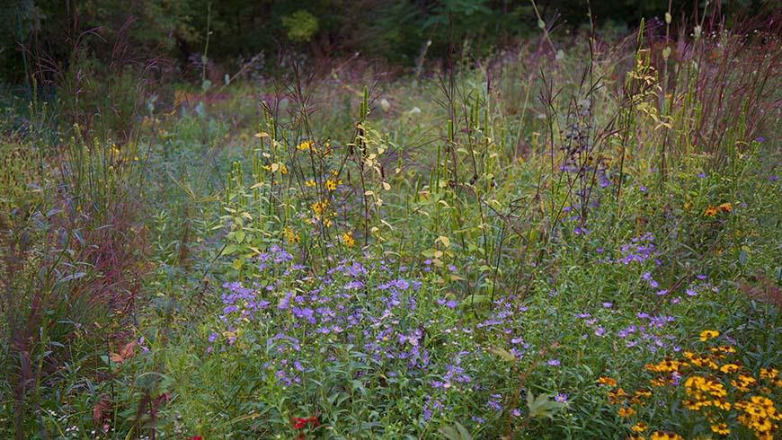 meadow planting in flower