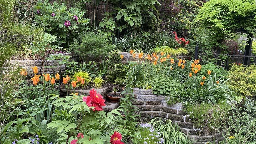 Scott Vonderheide's backyard garden