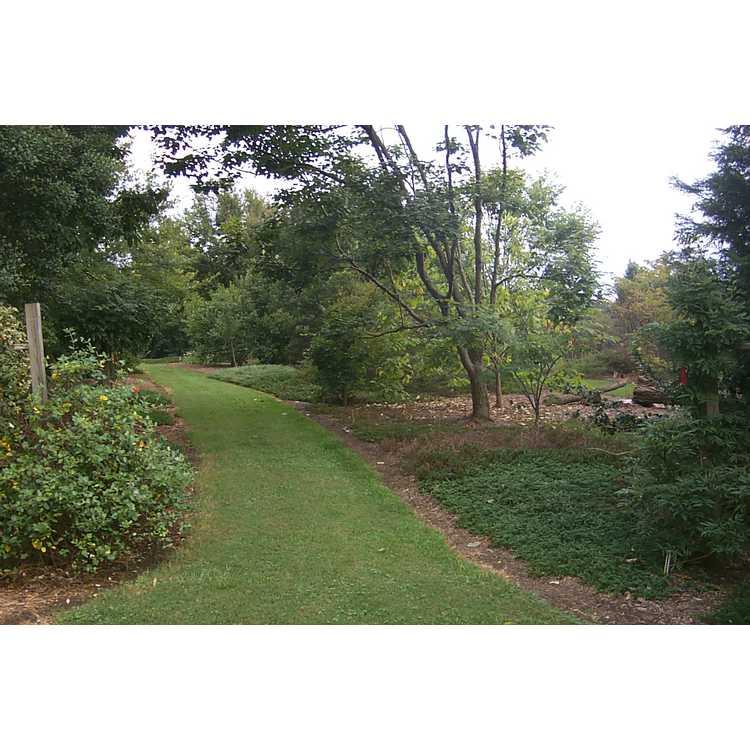 West Arboretum