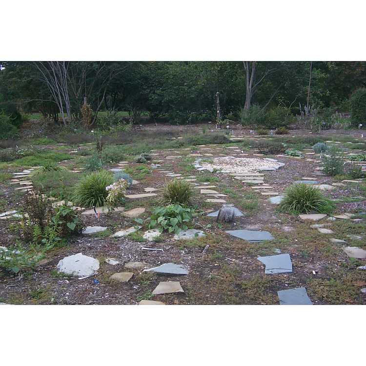 Leland Cypress Circle