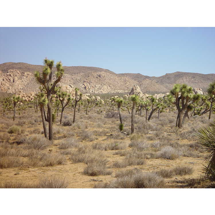 Twentynine Palms (near)