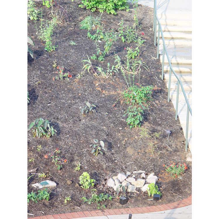 Terrace Stair Cascade Garden