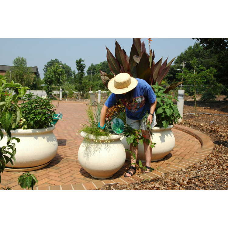Charlotte and LeRoy B. Martin Parking Circle Container Garden