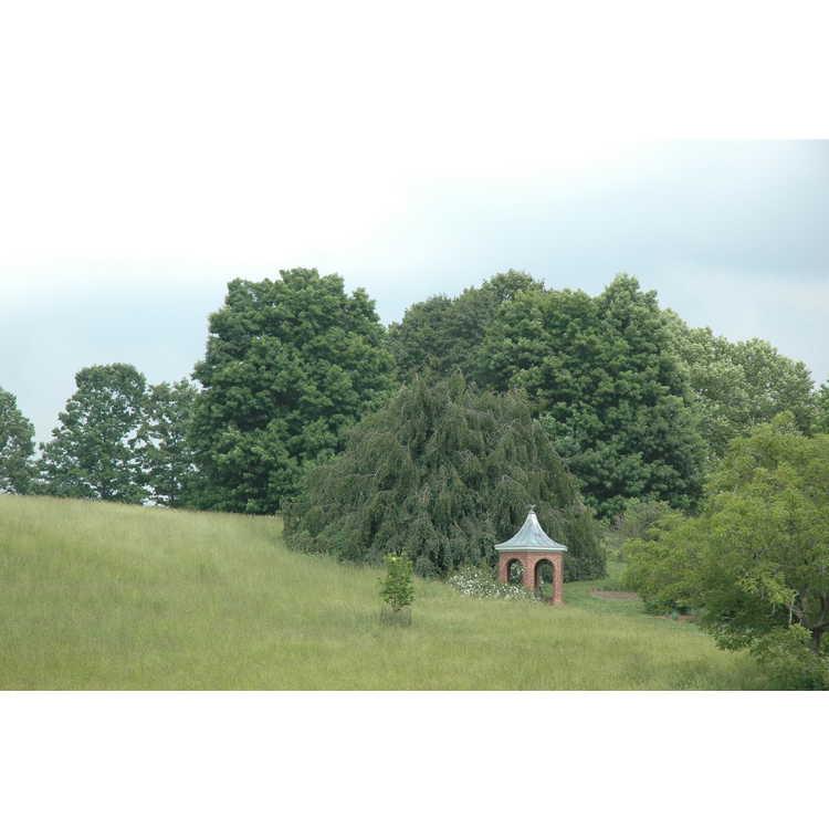 Sycamore Hill