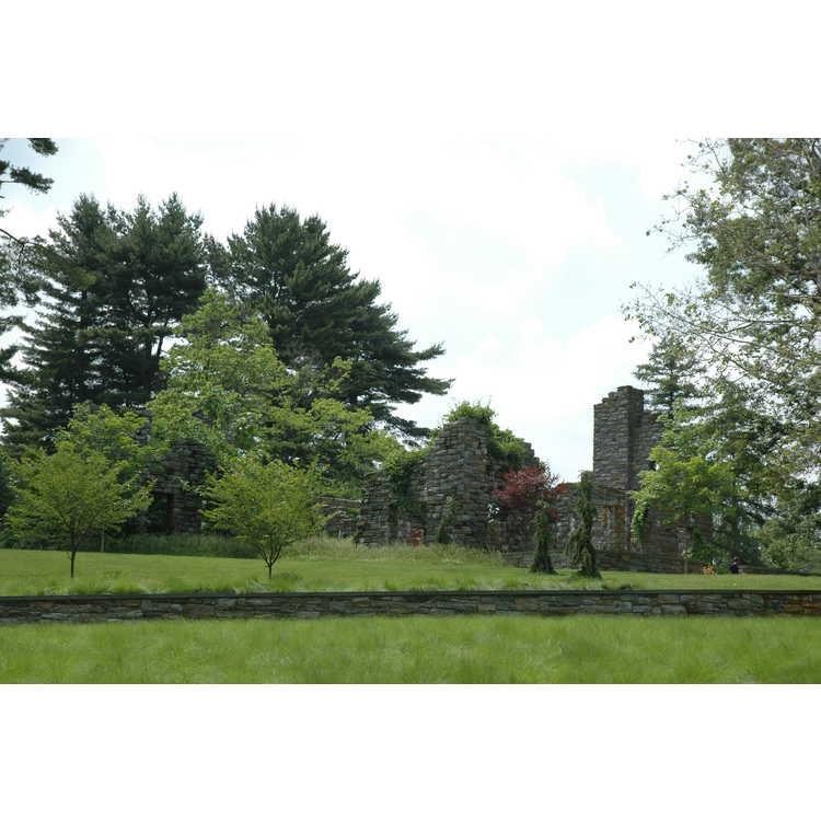 The Ruin Garden