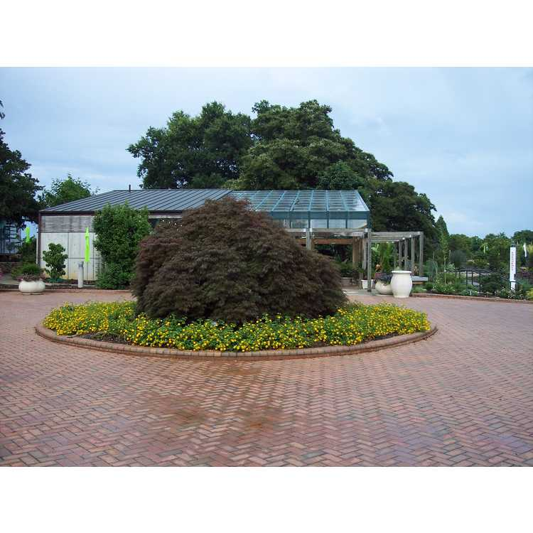 Opha Mae Powers Memorial Parking Circle Garden