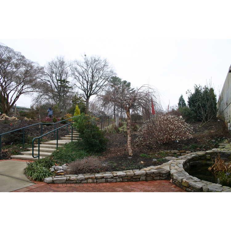 District X Garden Club of North Carolina Wall Garden