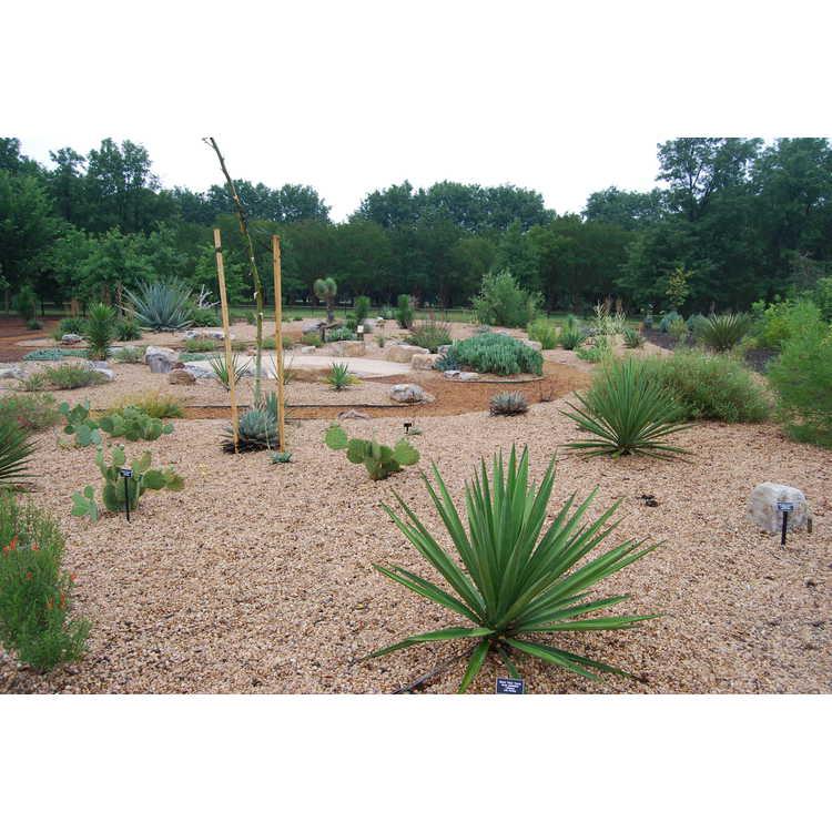 WOW Children's Adventure Garden