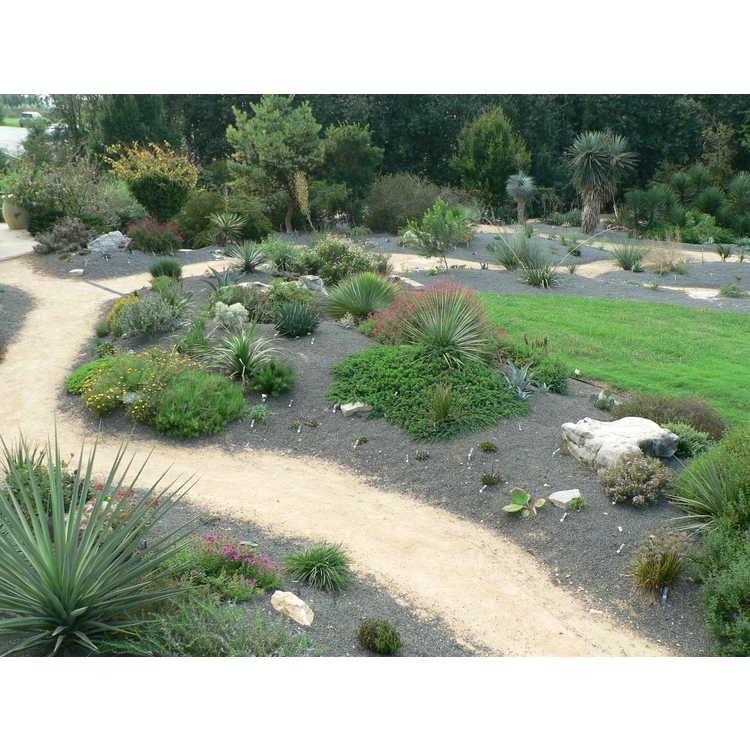 Scree Garden and Xeric Garden